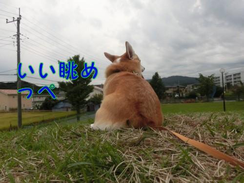 20140921_06.jpg