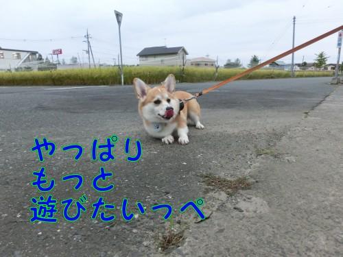 20140921_09.jpg