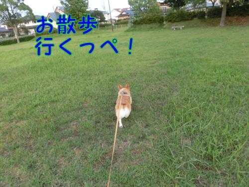 20140923_1.jpg