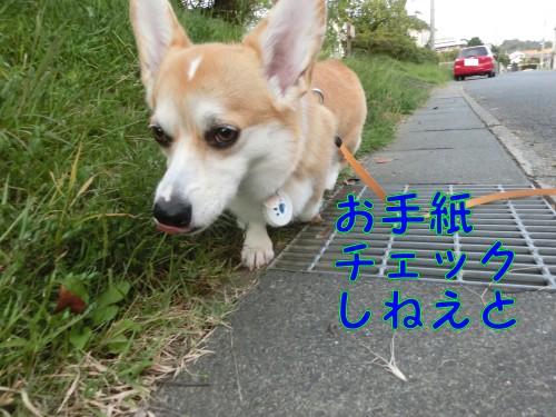 20140923_3.jpg