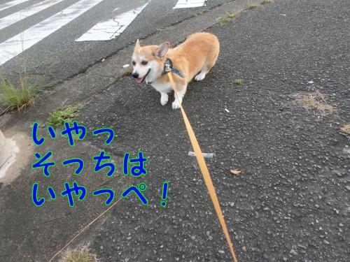 20140923_4.jpg