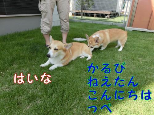 CIMG9343_NEW.jpg