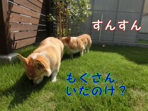 CIMG9358_NEW.jpg