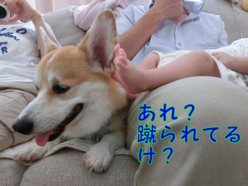 CIMG9467_NEW.jpg