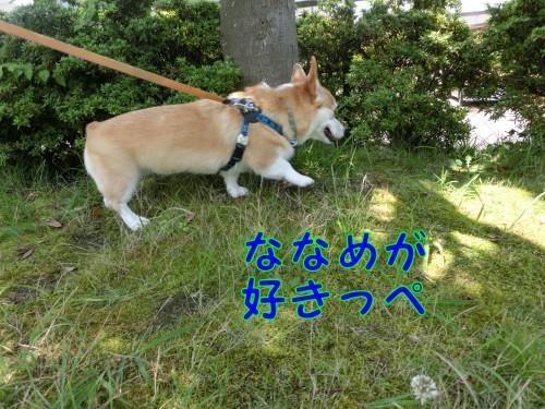 CIMG9570_NEW.jpg