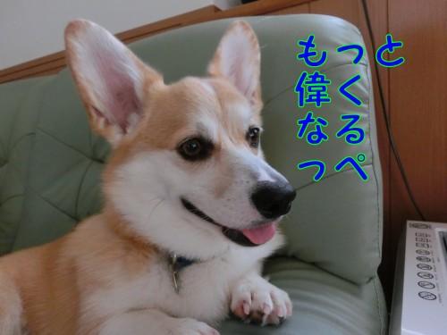 CIMG9586_NEW.jpg
