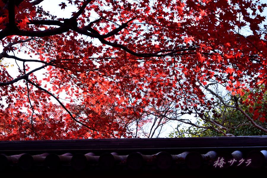 京都15(5)変更済