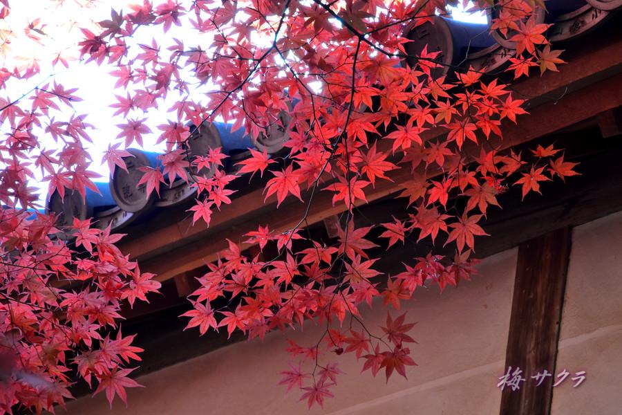 京都15(6)変更済