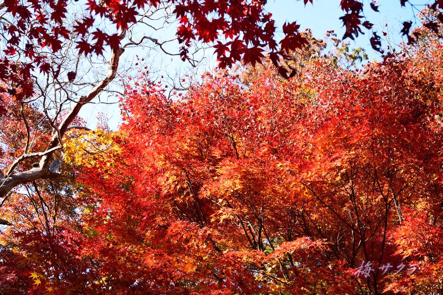 京都15(7)変更済