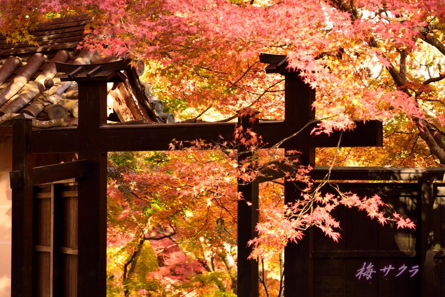 京都15(9)変更済
