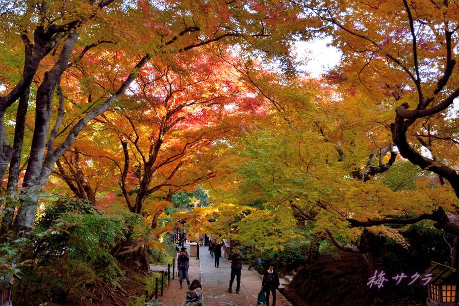 京都16(3)変更済