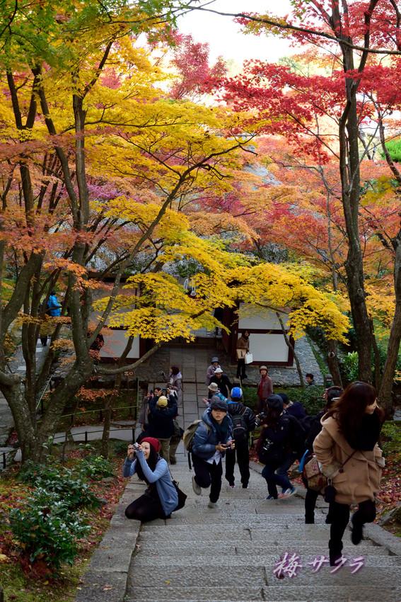 京都16(4)変更済