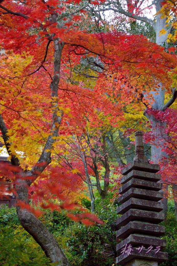 京都16(6)変更済