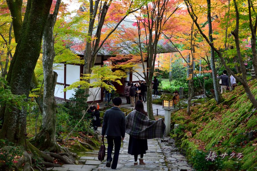 京都16(8)変更済