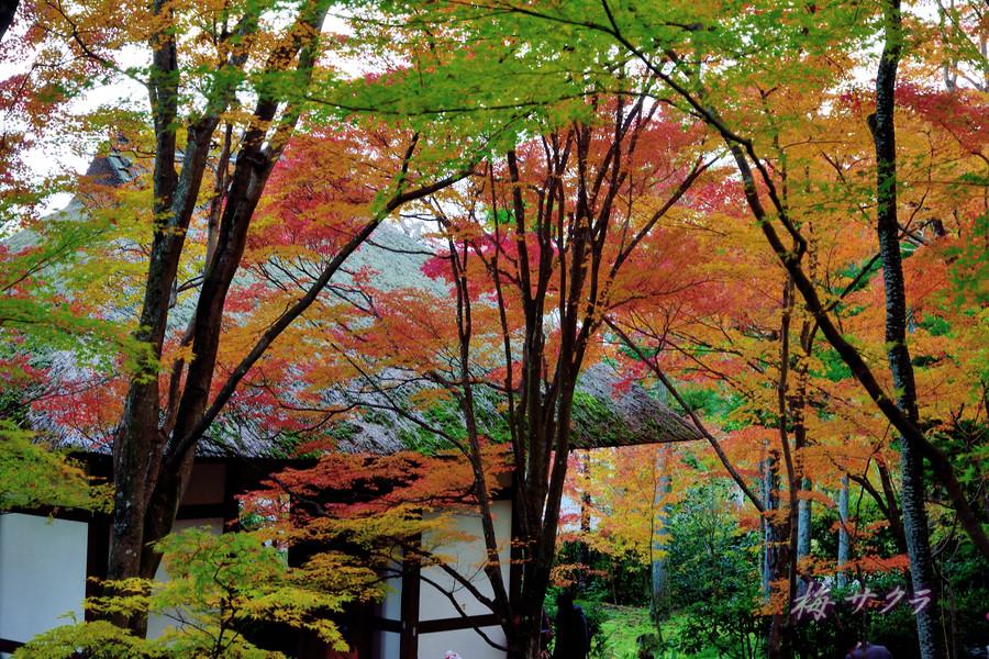 京都16(9)変更済