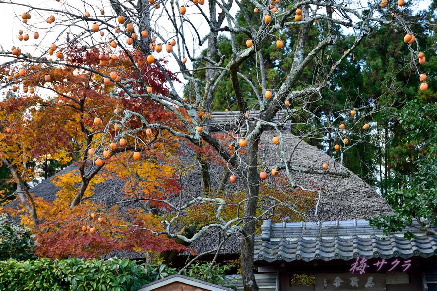 京都17(5)変更済