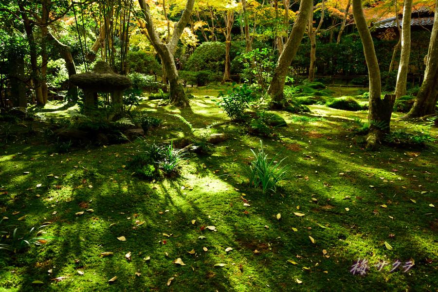 京都18(10)変更済