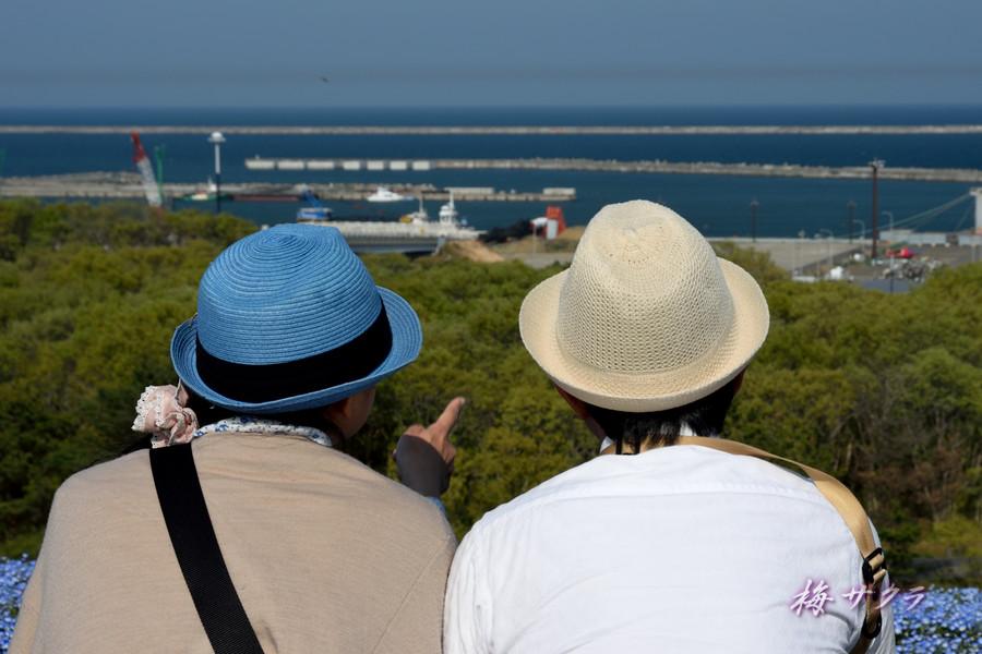 ひたち海浜公園3(7)変更済