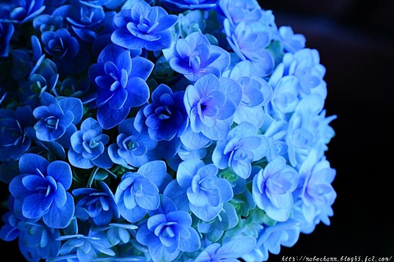 IMG_9886cb.jpg