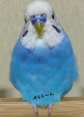 fc2_2014-06-14_00-01-57-171.jpg