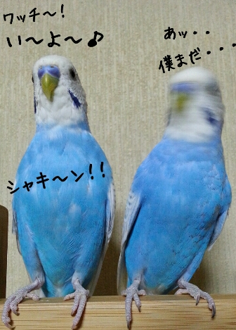 fc2_2014-06-28_23-09-17-997.jpg