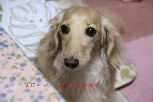 IMG_2686hosei.jpg