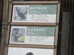 上野動物園 ホオアカトキ