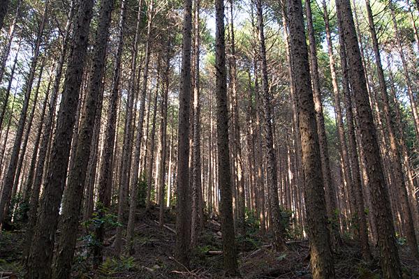 海上の森1-8
