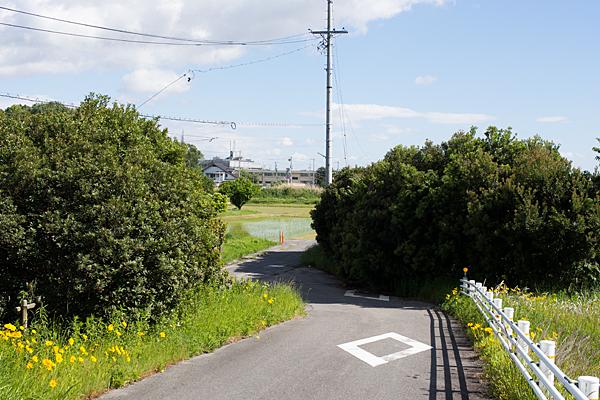 田んぼ風景-8