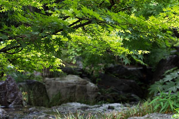 白鳥庭園-9