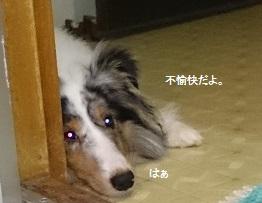 DSC_2198.jpg