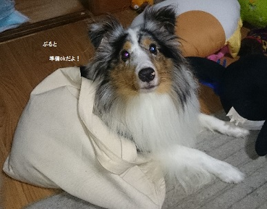 DSC_2232_20140902015806020.jpg