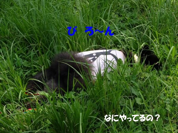 20140729192038c19.jpg