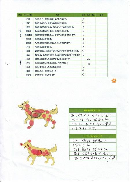 動物病院東京チカラめし19