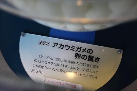 日和佐うみがめ博物館カレッタ14