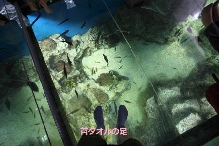 越前松島水族館41