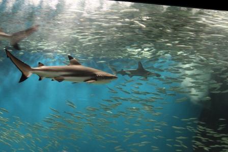 越前松島水族館49