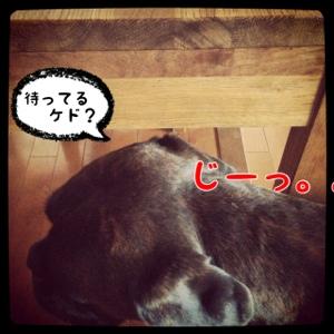 fc2blog_20140410085517e7a.jpg