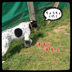 fc2blog_20140417200953cae.jpg