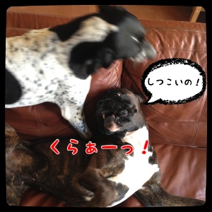 fc2blog_20140423181357b0d.jpg