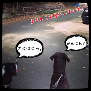 fc2blog_20140430190013071.jpg