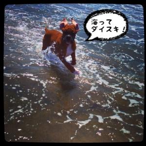 fc2blog_201408171822479c1.jpg
