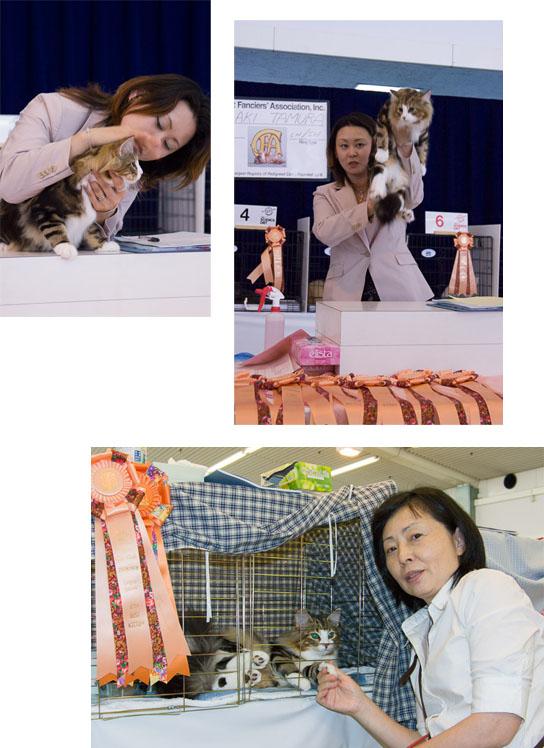 catshow.jpg