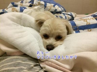 20140913204312b7e.jpg
