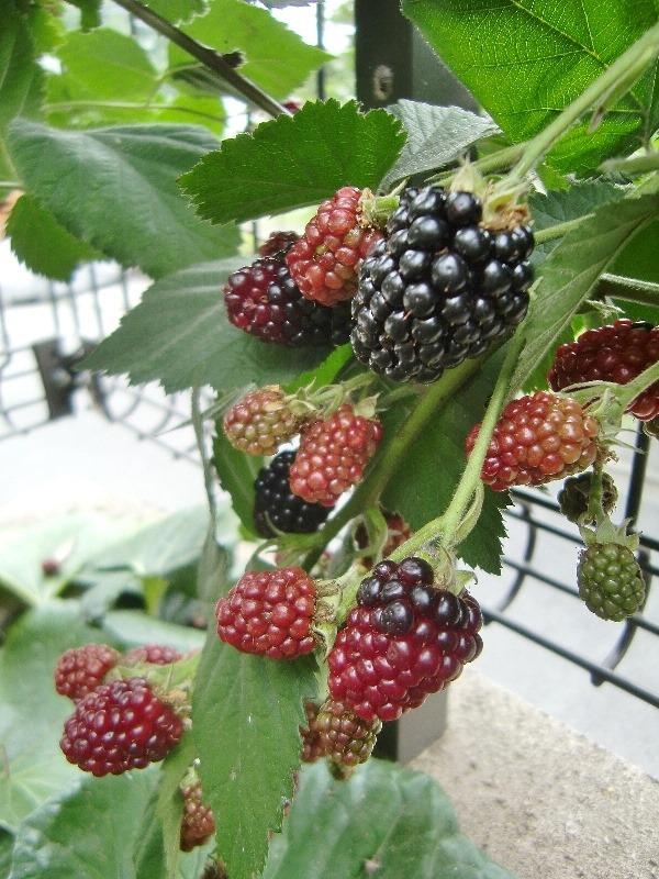 140724blackberry
