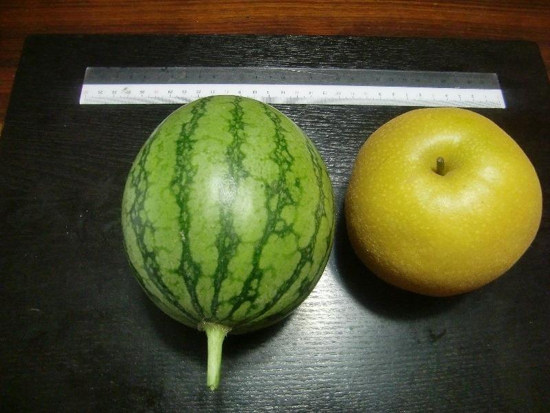 140906watermelon2