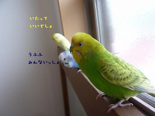 s-P1260872.jpg