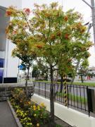 nanakamado1_1.jpg