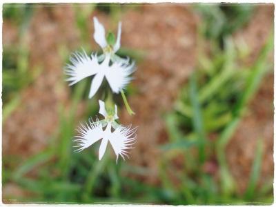 flowerblo1408046.jpg