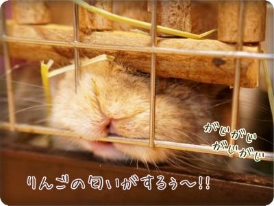 whipblo1406131.jpg
